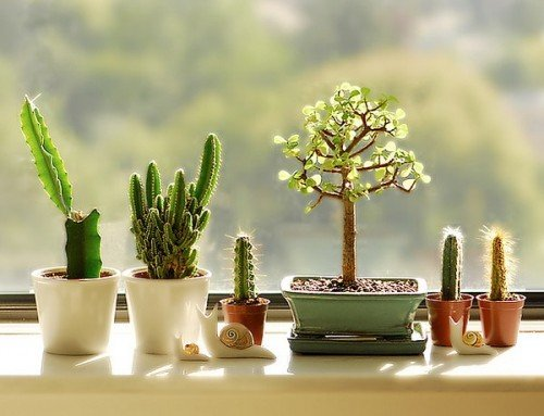 How will window films protect your indoor plants?